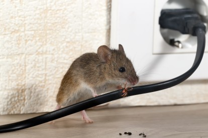 Pest Control in Harlesden, Willesden, NW10. Call Now! 020 8166 9746