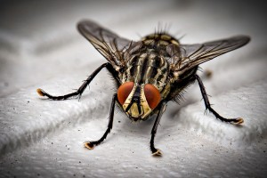 Insect Control, Pest Control in Harlesden, Willesden, NW10. Call Now 020 8166 9746